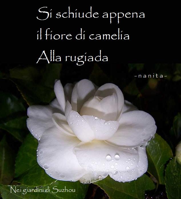 camelia haiku