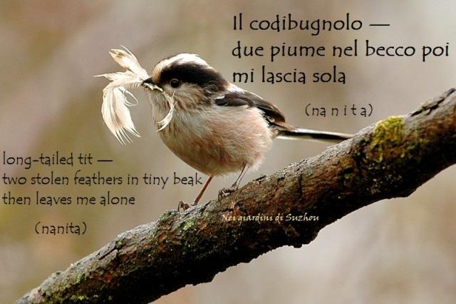 codibugnolo_nidif_0182_1m