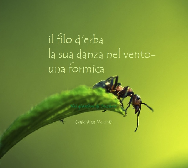 formica-erba (1)