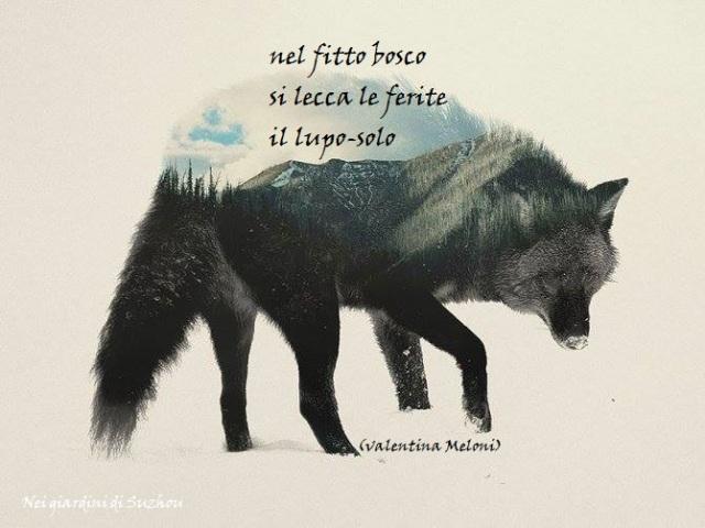 ill. Andreas Lie, Lupo e bosco