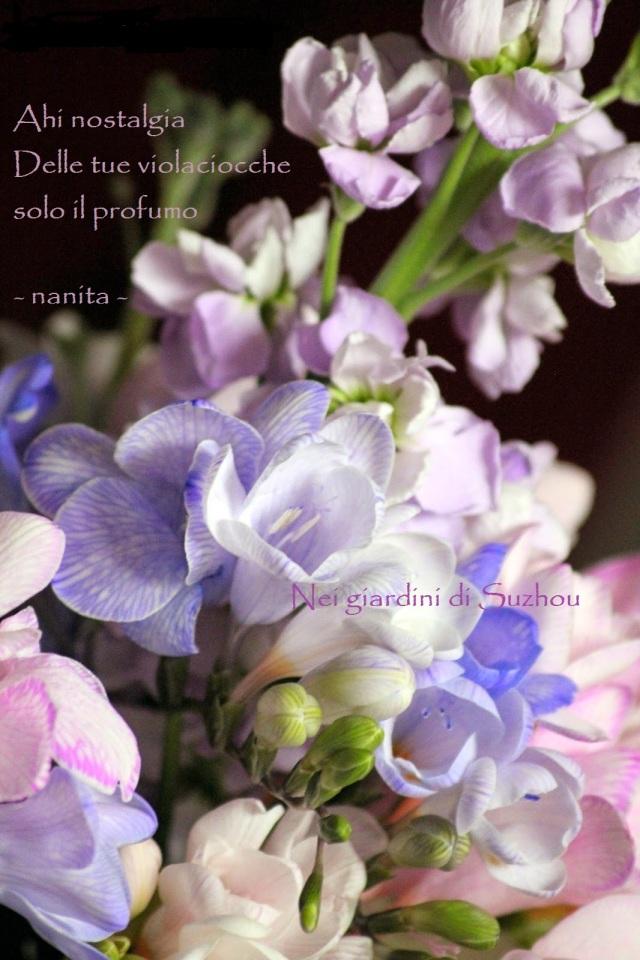violacciocche, fresie, tulipani