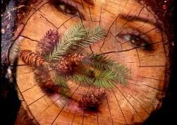 Gli anelli del Tempo.Solchi di resina, gemme di speranza, ambra di verdi ricordi.
