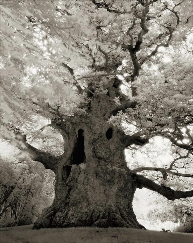 """the oldest living things"" on the planet by Beth Moon"