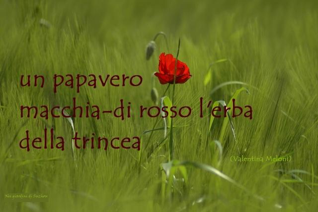 Papavero9 - Copia