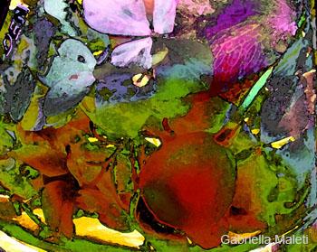 petali bacche con filtri